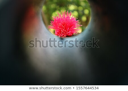 pink dahlia macro shot soft look stock photo © julietphotography
