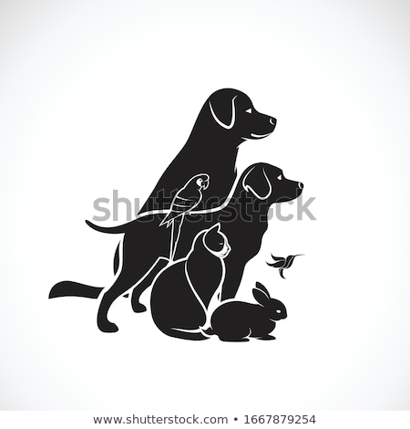 group of pets stock photo © lightsource