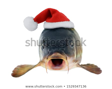 Noël carpe tchèque tradition poissons animaux Photo stock © phbcz