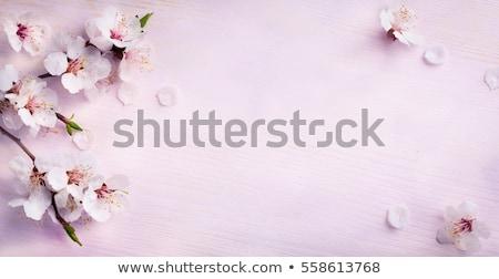 Flores verde flores blancas primavera color blanco Foto stock © timurock