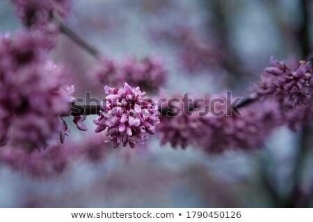 весны новых роста цветы дерево складе Сток-фото © dgilder