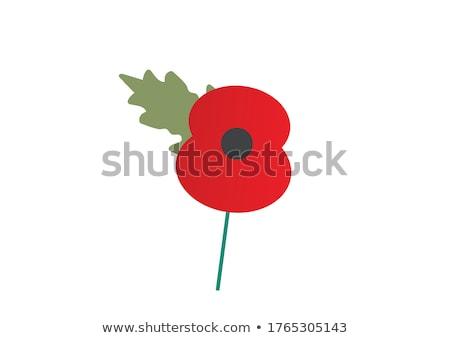 Stockfoto: Poppy · Rood · bloem · voorjaar · natuur · zomer