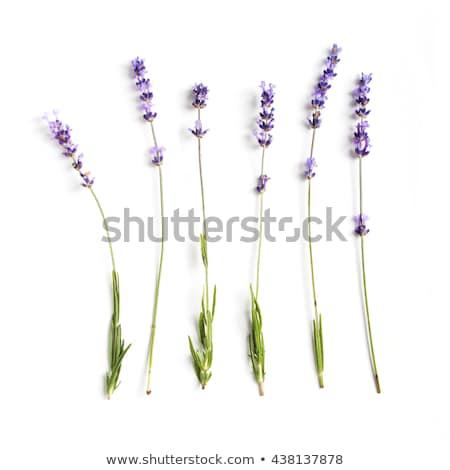 Collectie bloemen witte montage verscheidene Stockfoto © Valeriy