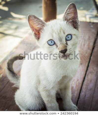Stock photo: Homeless Kitty