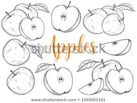 яблоко · эскиз · ручной · работы · белый · Рисунок · иллюстрация - Сток-фото © kenishirotie