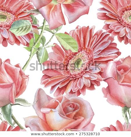 Red gerbera watercolor vector illustration. Hand-drawing bouquet Stock photo © artibelka