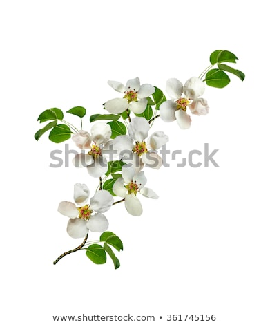 Branches of spring flowers  Stock photo © master1305