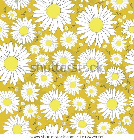 Jaune blanche Daisy fleur jardin de fleurs lumière Photo stock © tang90246