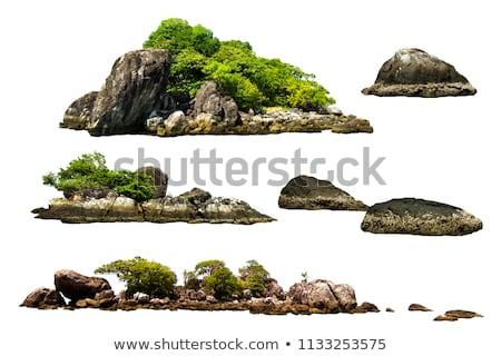 Rock bos hoog bomen steen schoonheid Stockfoto © Kotenko