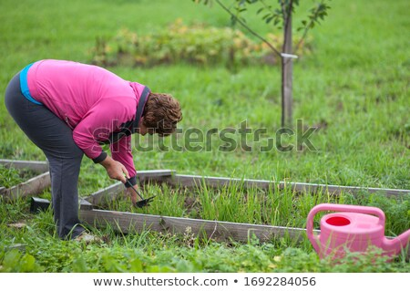 closeup of watering can holded by woman gardener in apron stock photo © deandrobot