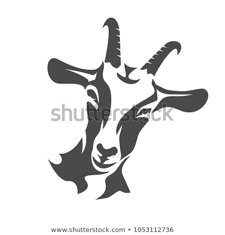 Kecske fej feketefehér rajz illusztráció vektor Stock fotó © derocz