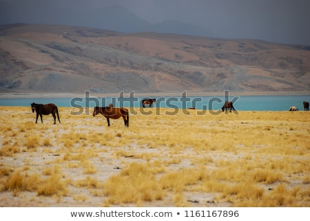 Lago tibete paisagem azul neve montanhas Foto stock © bbbar
