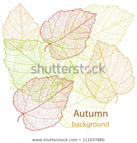 Autumn leafs abstract background. EPS 8 Stock photo © beholdereye