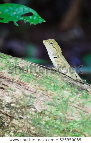 floresta · monstro · lobisomem · criatura · fora · escuro - foto stock © frameangel