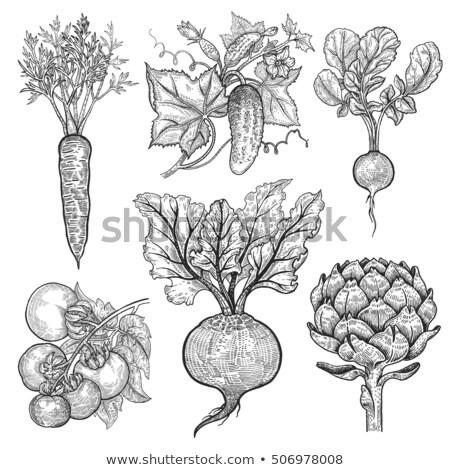 Carrot illustration, drawing, engraving, line art, vegetable, vector stock photo © JenesesImre