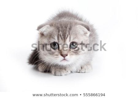 Китти камеры котенка животного киска фотография Сток-фото © idesign