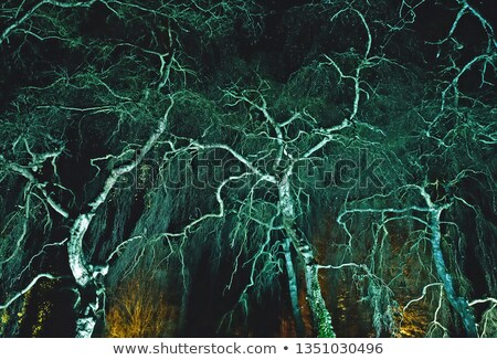 Floodlit garden Stock photo © backyardproductions