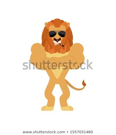 aslan · kafa · örnek · bakıyor · yüz · arka · plan - stok fotoğraf © popaukropa