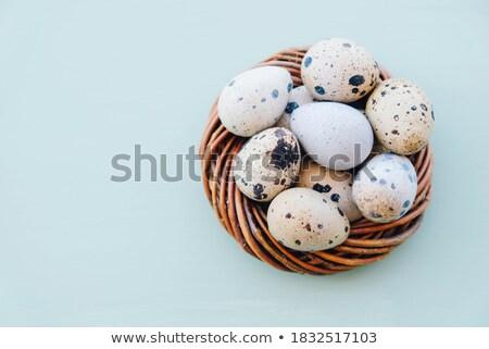 Páscoa · ovos · bichano · salgueiro · topo · ver - foto stock © melnyk