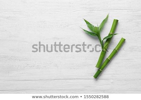 Bamboe groen blad blad natuurlijke groene bladeren boom Stockfoto © odina222