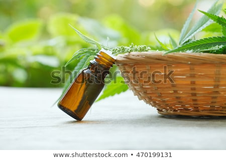 seeds of cannabis or hemp with essential oil stock photo © bdspn