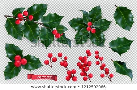 Stok fotoğraf: Yaprakları · kırmızı · karpuzu · Noel · dekorasyon · vektör