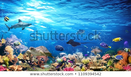 Tropical fish and corals in the sea under water Photo stock © galitskaya