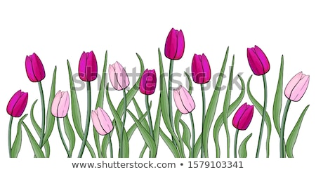 spring tulip flowers field vector realistic banner templates season backgrounds stock photo © frimufilms