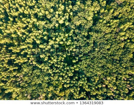 Top view of green trees on a sunny day. Deciduous forest as a background for the layout. Aerial view Stock photo © artjazz