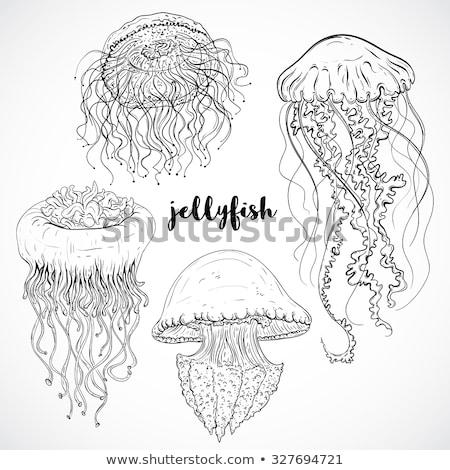 Kézzel rajzolt meduza rajz stílus víz textúra Stock fotó © Arkadivna