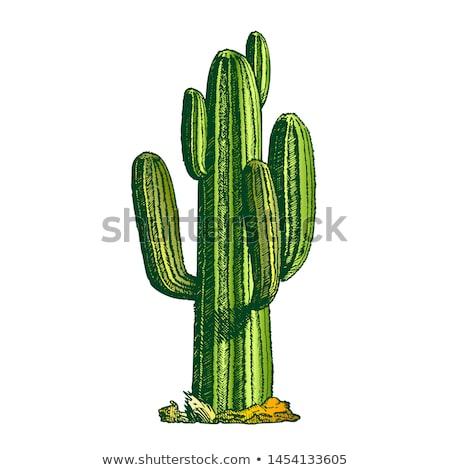 вектора · кактус · пустыне · пейзаж · искусства · оранжевый - Сток-фото © pikepicture