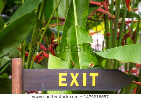 exit sign on a wooden plate in a rainforest jungle stock photo © boggy