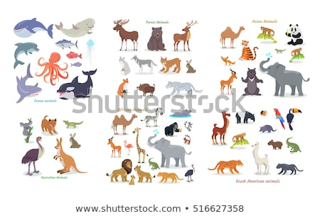 South American Animals Cartoon Vectors Set Stock photo © robuart