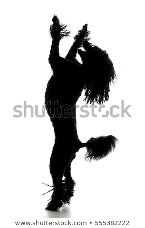 Silhouette of an adorable Puli standing on two legs Stock photo © vauvau
