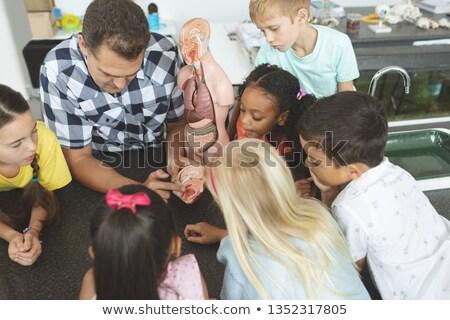 Kilátás tanár mutat iskola gyerekek agy Stock fotó © wavebreak_media