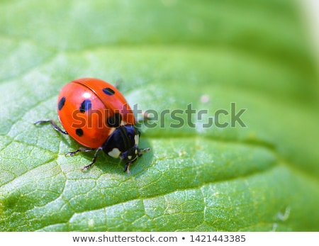 Coccinelle escalade feuille verte Photo stock © guffoto
