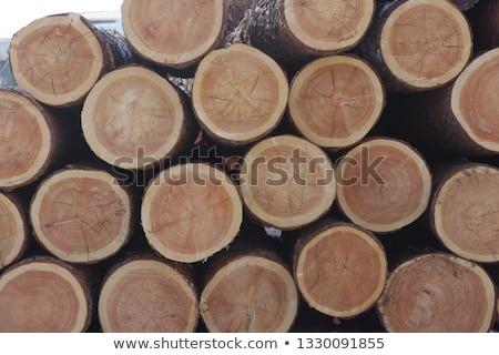 Logging in Japan Stock photo © craig