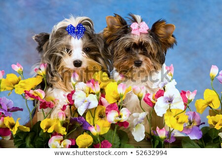 duo behind a hedge Stock photo © photography33