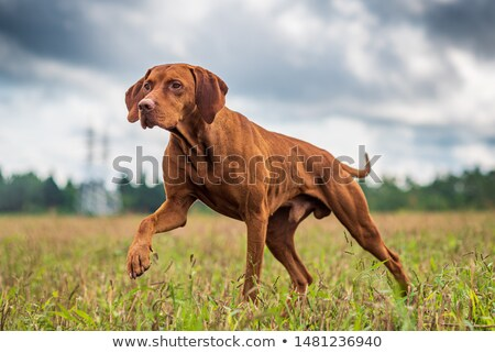 Hunter crouching by dog Stock photo © photography33