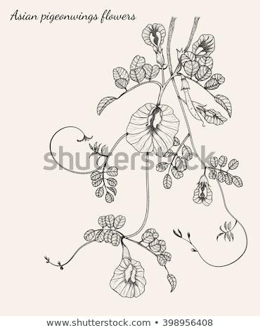 planta · jardim · natureza · folha · neve - foto stock © witthaya