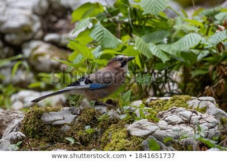 branche · nature · oiseau · plumes · animaux - photo stock © taviphoto