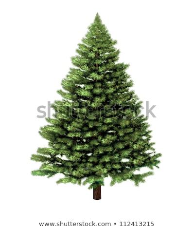 three branch of fir-tree Stock photo © shutswis