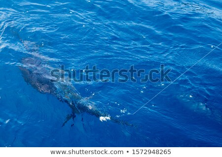 Stock photo: Sailfish sportfishing close to the boat with fishing line