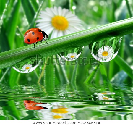 rugiada · drop · lama · erba · giardino · verde - foto d'archivio © alessandrozocc