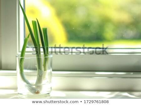 Frame cipolla fresche primavera isolato rustico Foto d'archivio © zhekos