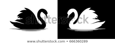 Fehér hattyú víz víztükör szeretet szív Stock fotó © master1305