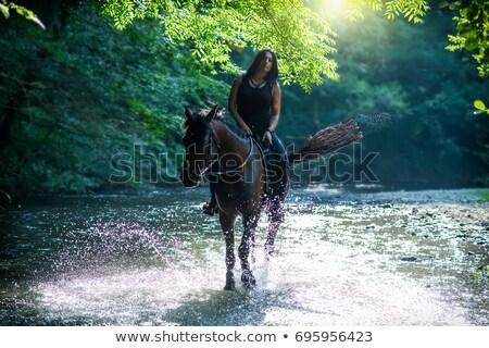 equitação · cavalo · silhuetas · ilustração · esportes - foto stock © bokica