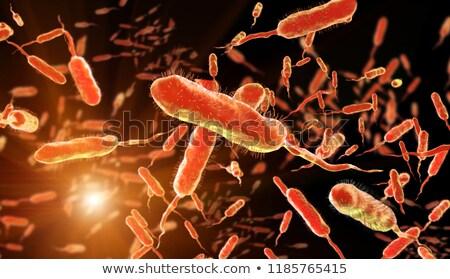 Vibrio Cholerae Bacteria Stock photo © idesign