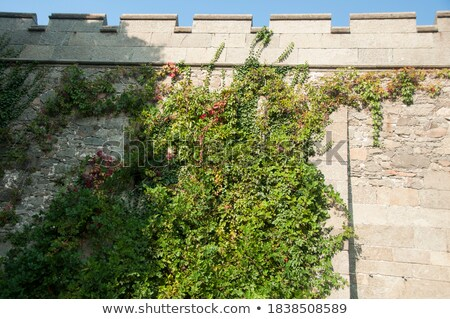 Old castle's walls covered with green ivy Stock photo © stefanoventuri