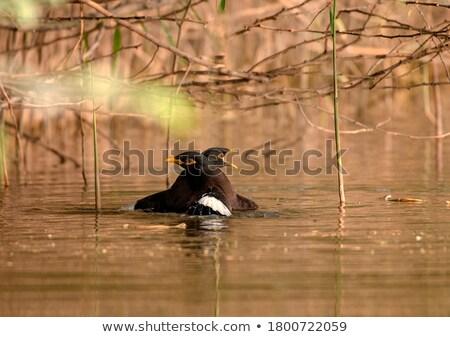 Paire cute baiser surface de l'eau famille printemps Photo stock © taviphoto